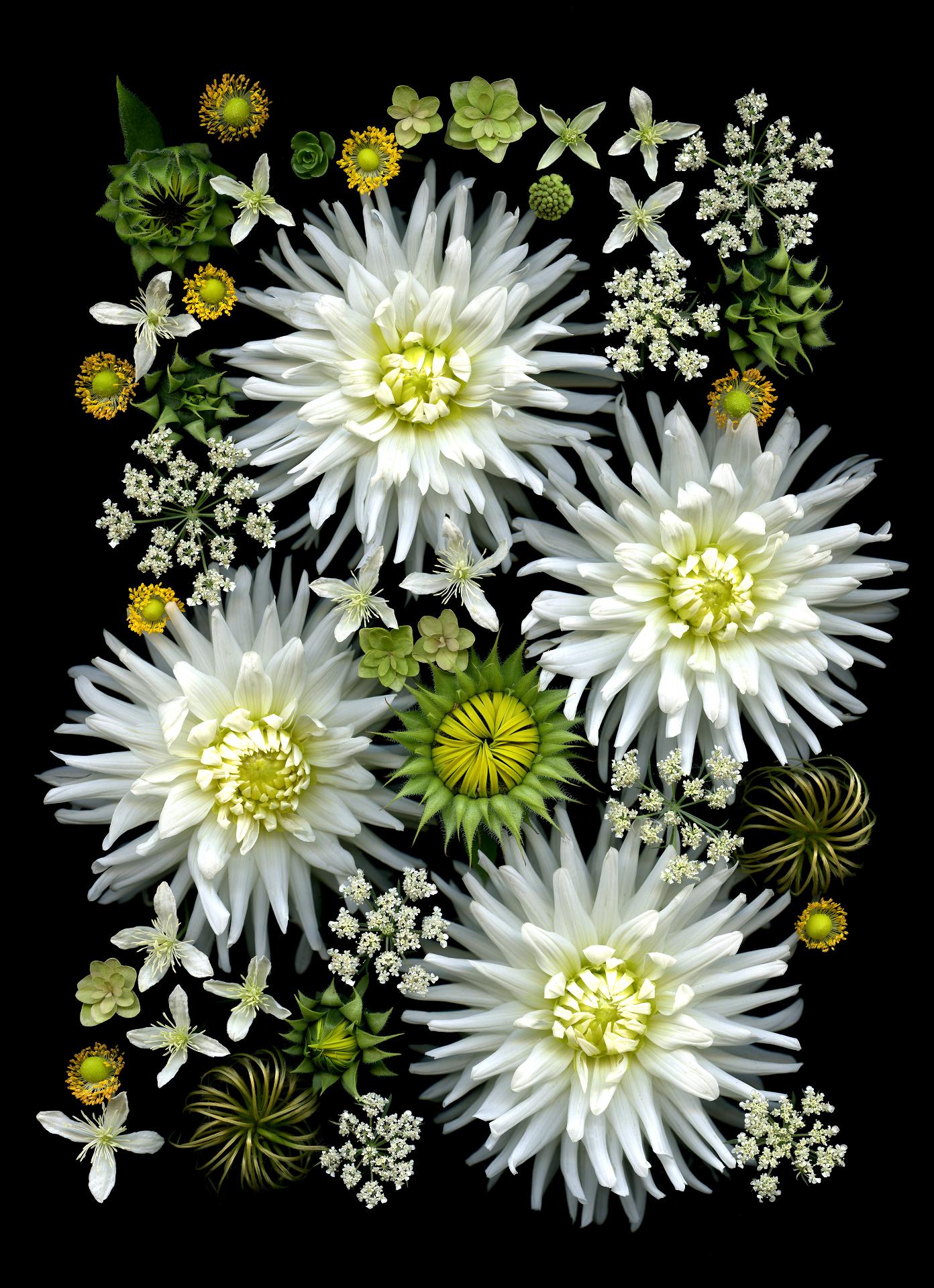 Flower Composition 17
