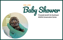 Join the Baby Shower - On-Line!