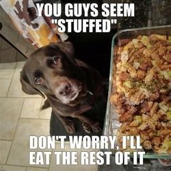 """Meme of a dog staring at a baking dish full of stuffing on the counter top that states, """"You guys seem 'stuffed.' Don't worry; I'll eat the rest of it."""""""