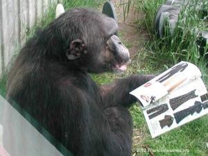 Dar Looks Through a Magazine