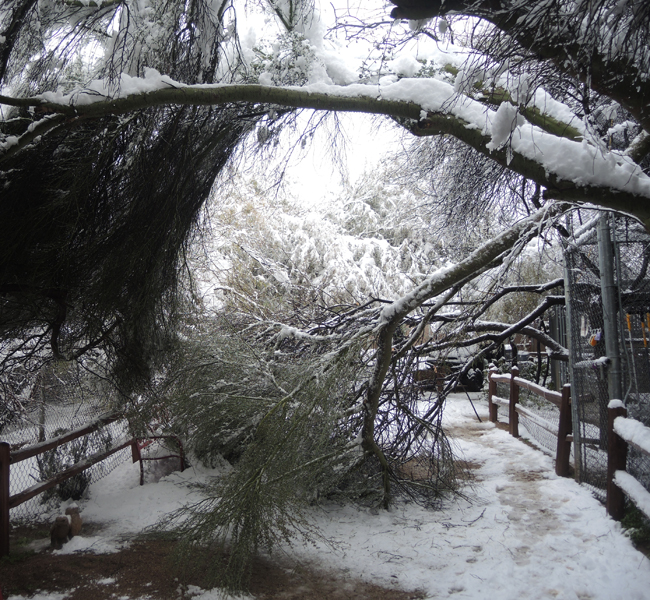 Winter Storm Damage