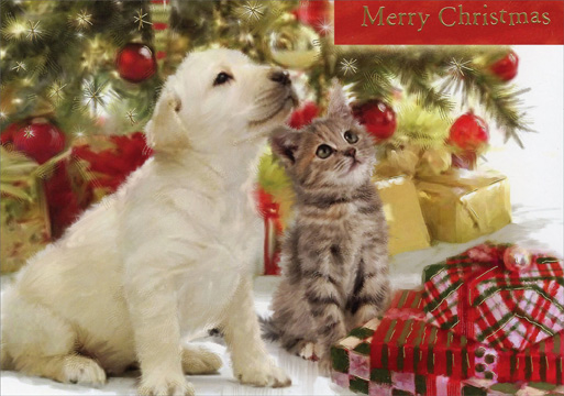 Merry Christmas Puppies.Animal Shelter Of Northeast Nebraska How To Help Event