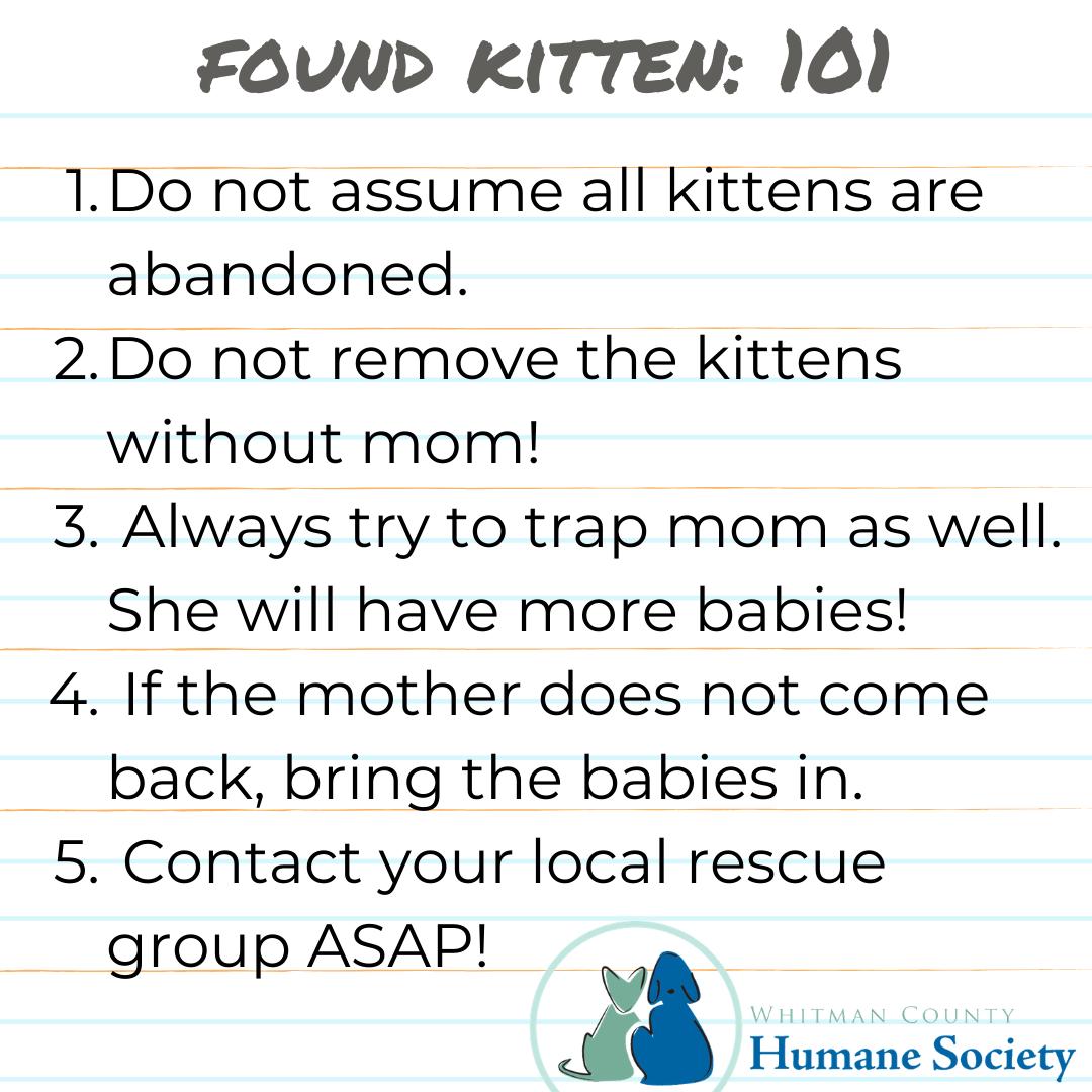 Found Kittens 101