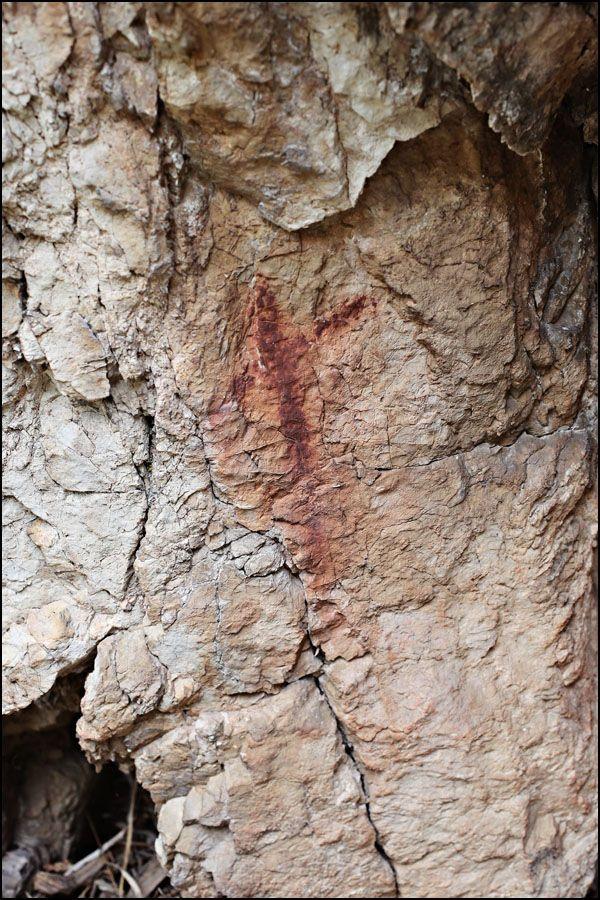 Found A Cool Petroglyph!