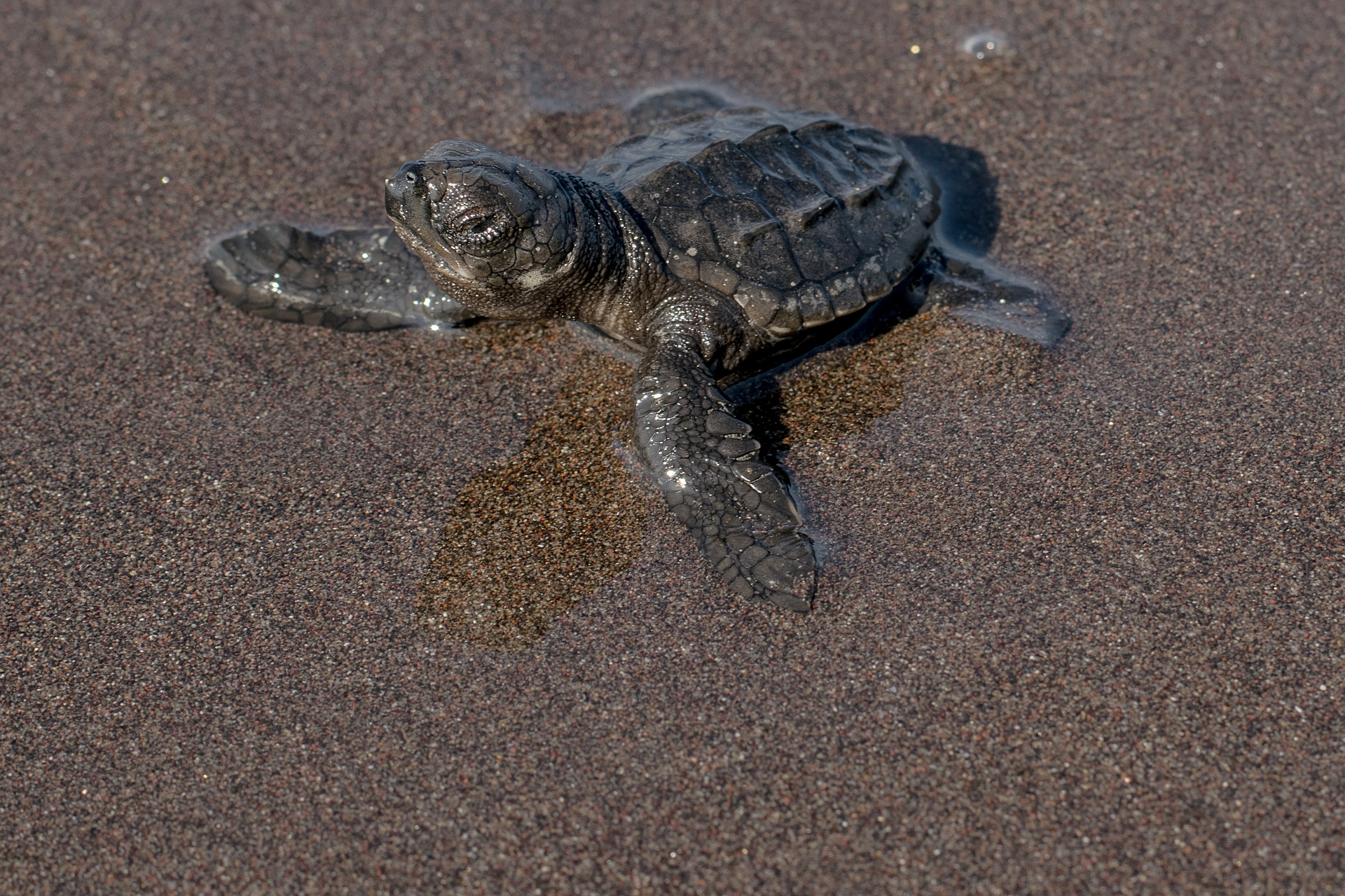 Funding Available to Pensacola Beach Residents for Sea Turtle Friendly Lighting