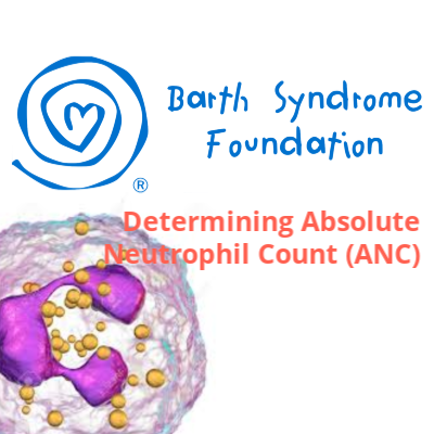 Determining Absolute Neutrophil Count (ANC)