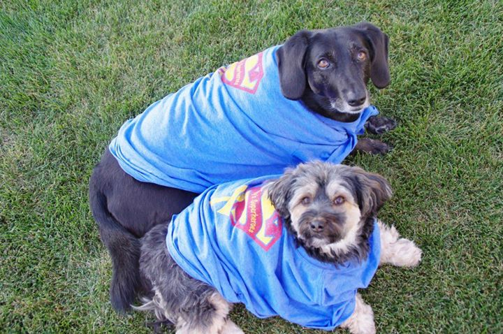 Terry & Karlas pups are superheroes too