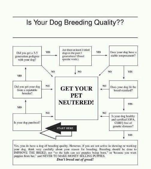 Is My Dog Breed Quality