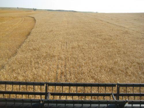 Olson Harvest