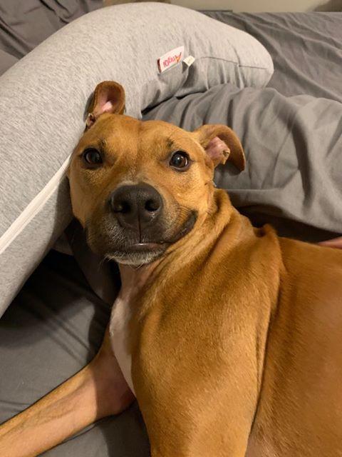 7/2/20: Hazel (Update)
