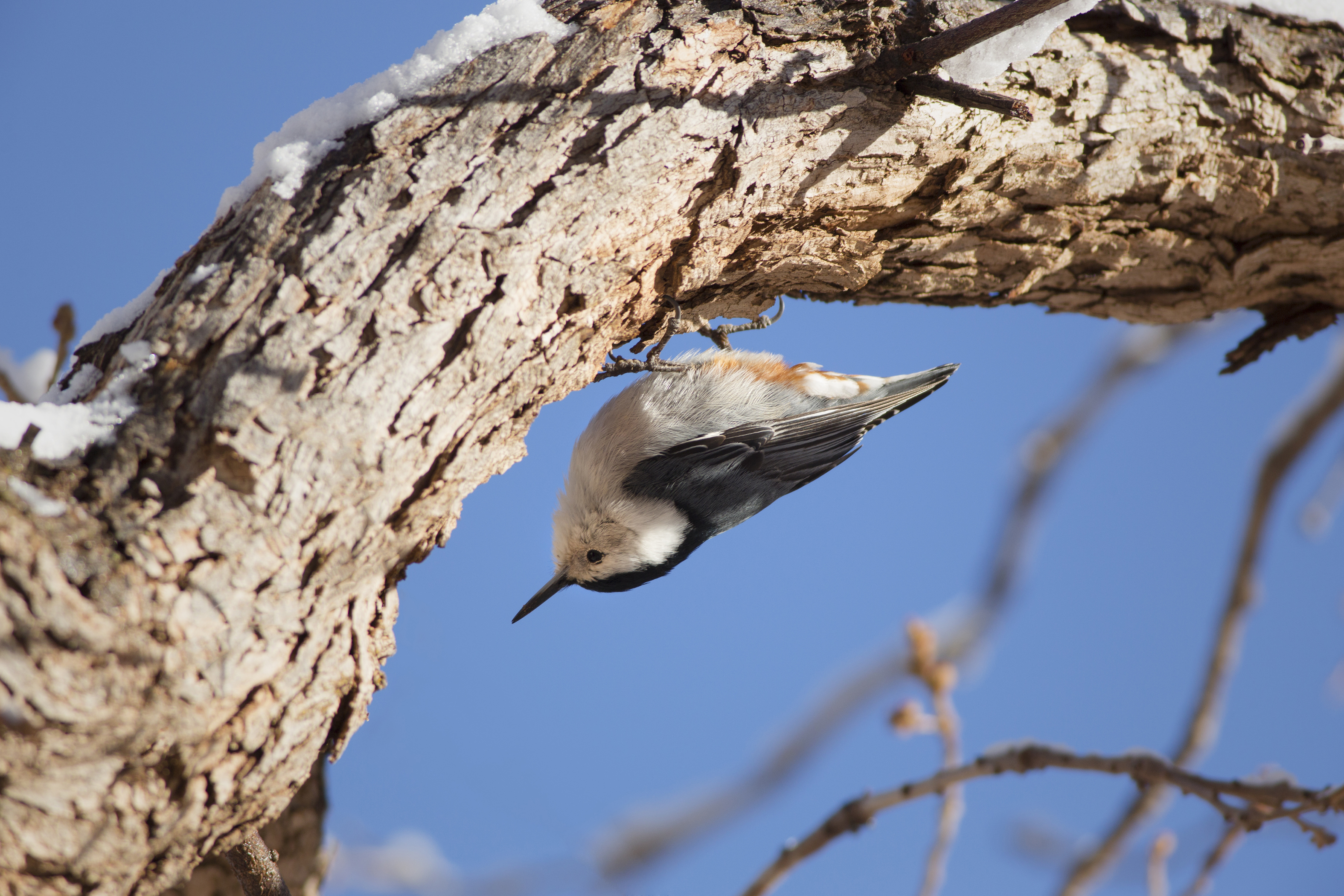 Rhode Island Birds on the Brink: Confronting the Challenges of Climate Change