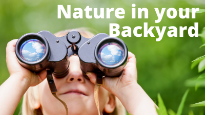 Audubon at Home: Nature in Your Backyard