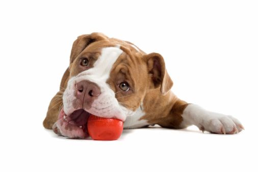 Click here to view the Basic Dog Obedience Class Outline!