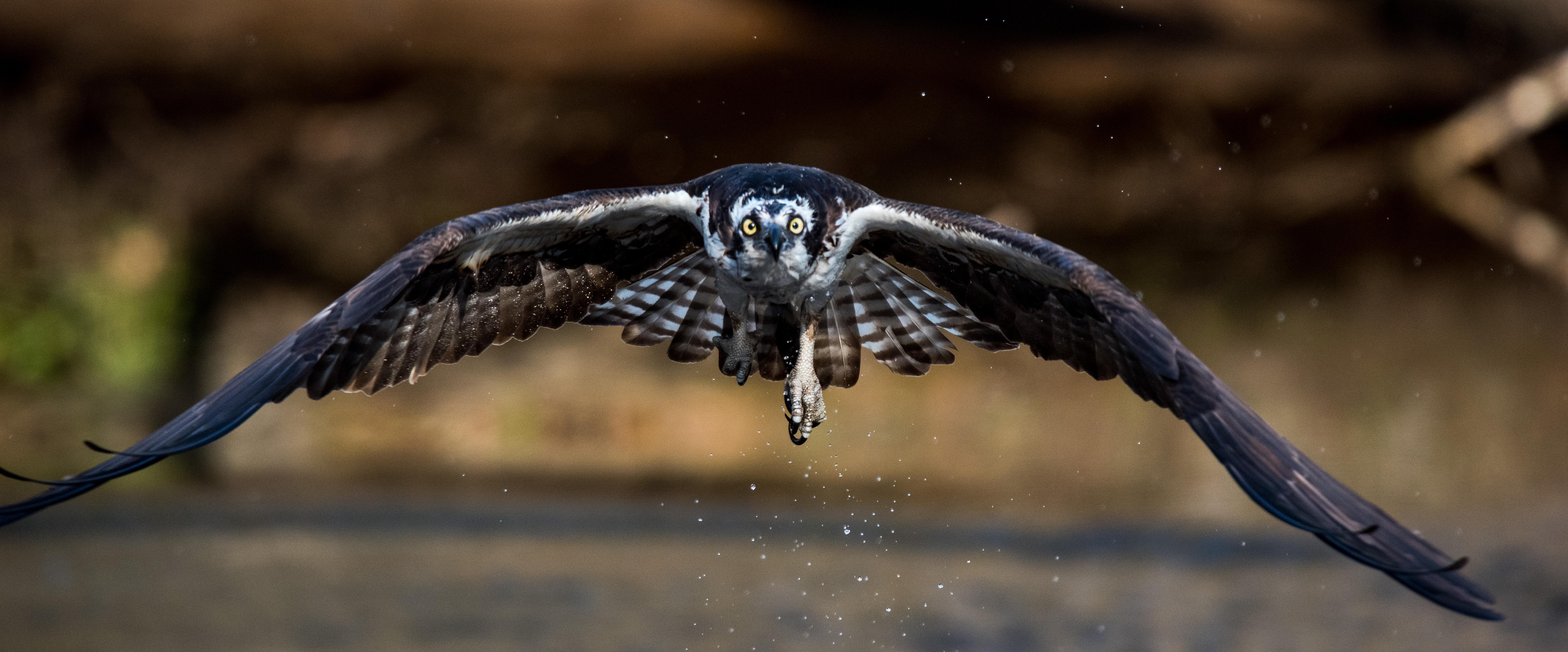 Osprey Monitoring Training Sessions