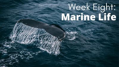 Audubon at Home: Marine Life