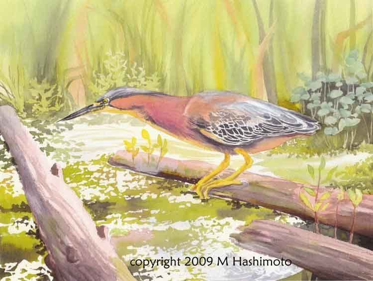 Watercolor Workshop: Birds in Their Habitats with Molly Hashimoto