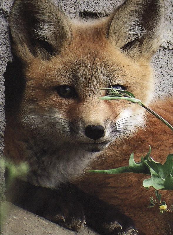 1st - Wildlife