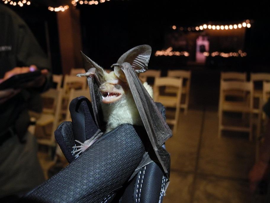 7pm Bat Netting Event
