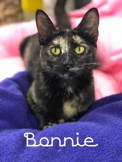 Bonnie 31719
