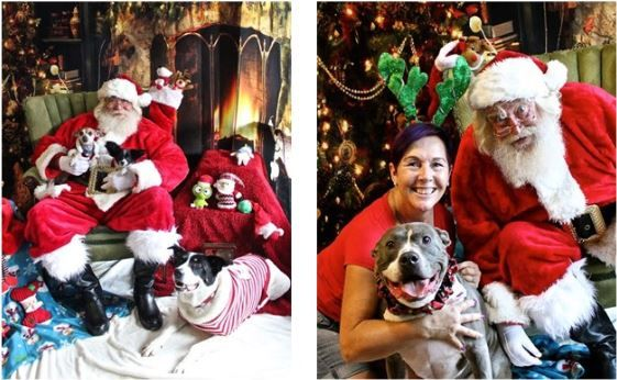 Bring your Dog for Pictures with Santa!