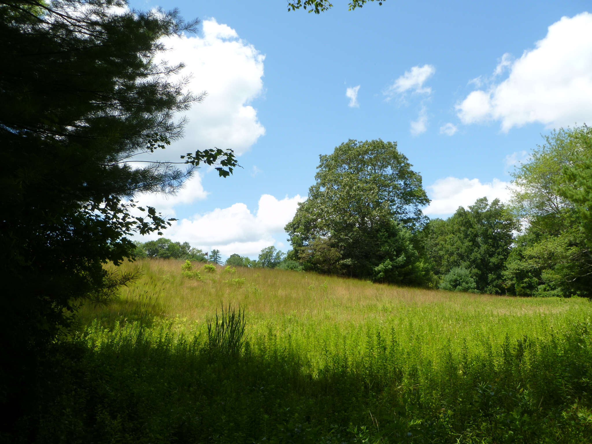 Audubon Society of Rhode Island Fisherville Brook Wildlife Refuge Exeter Birds Birdwatching environment hiking