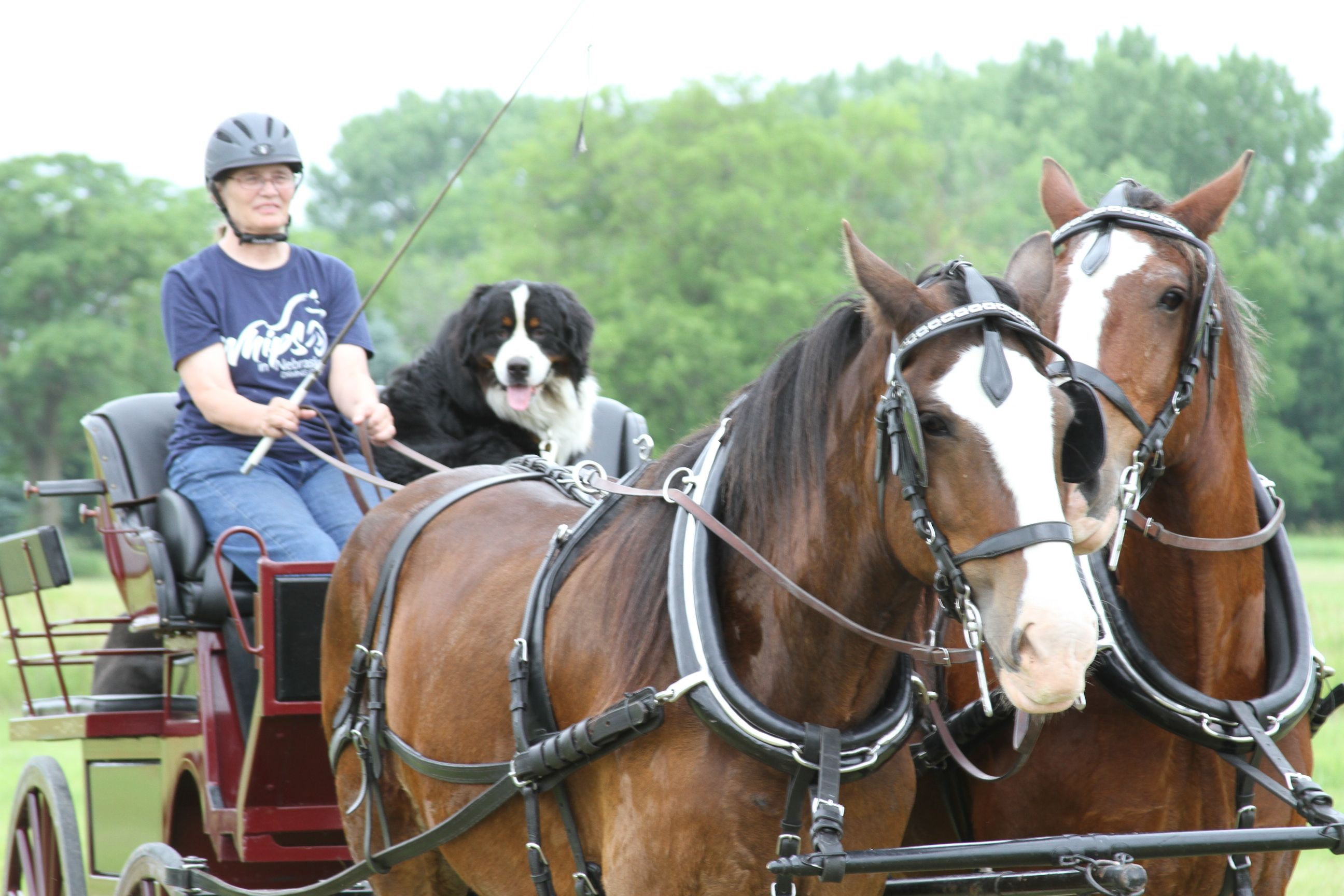 Horse and Carriage Event
