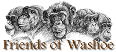 FOW graphic of chimps