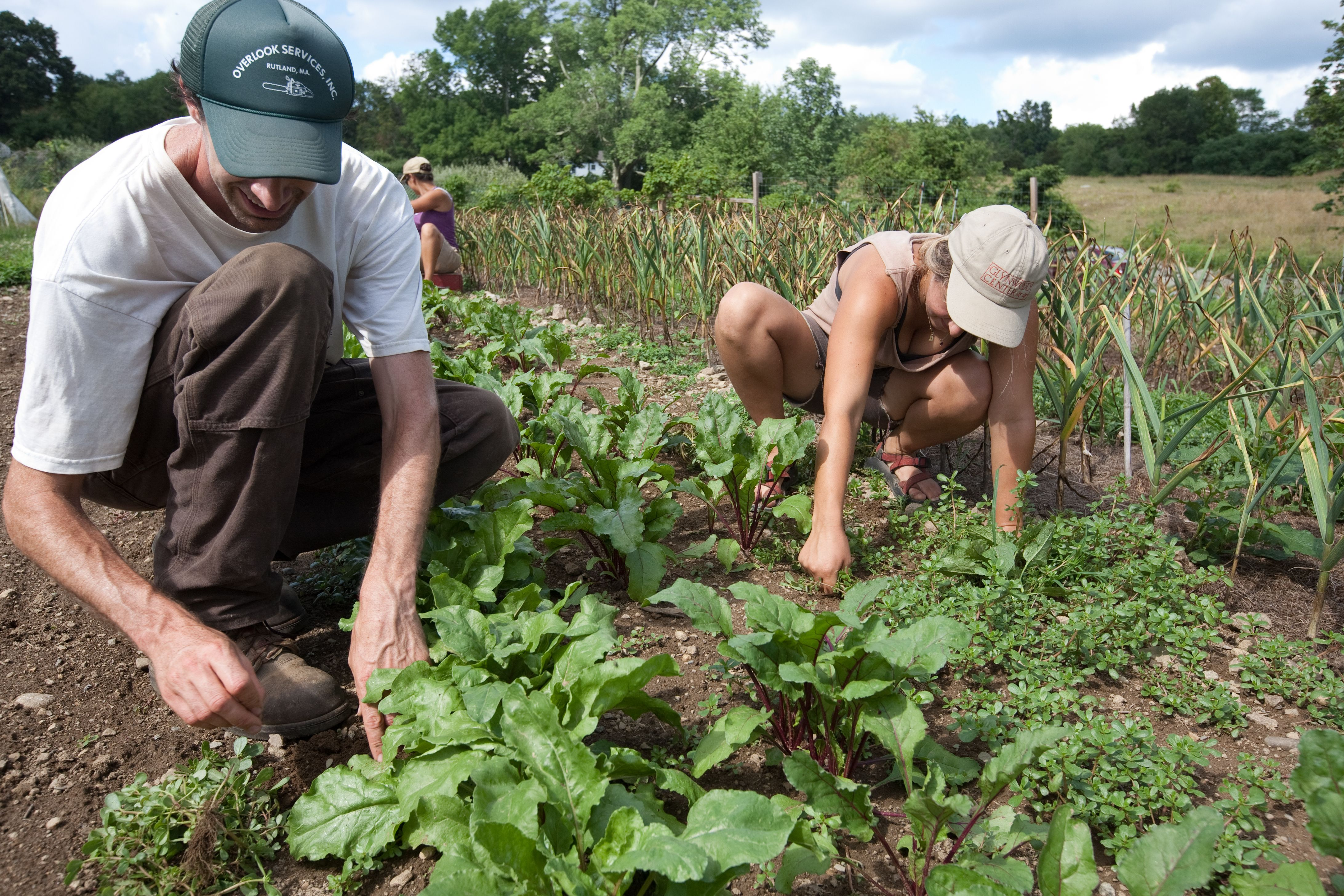 Glynwood Hosts Winter Series of Farmer Training Workshops
