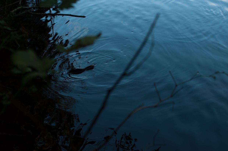 Ward Lake 14, Salmon Fining