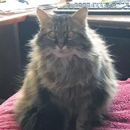 LOST: Cat (Roberto)