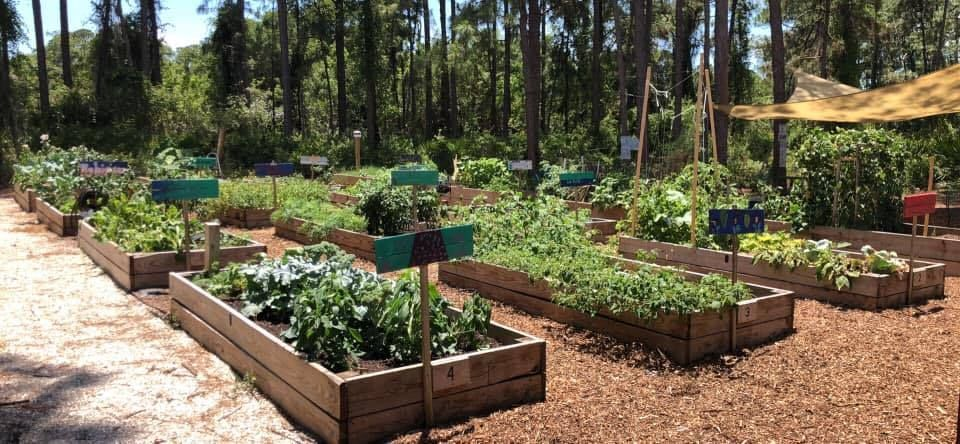 Raised beds in a community garden