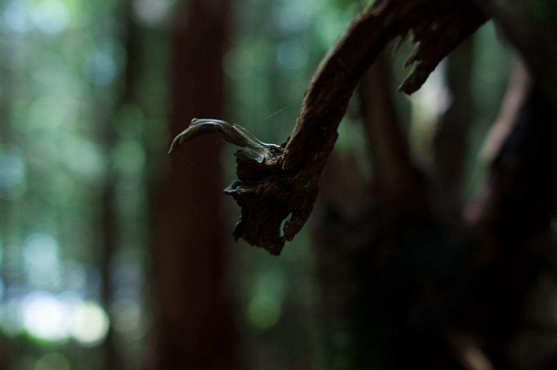 Rainbird 9, Branch with Face