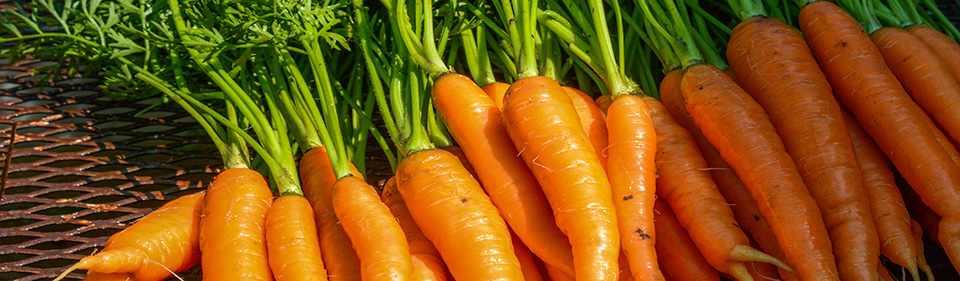 carrot for homepage banner