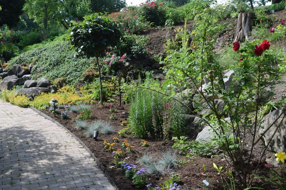 3. Dr. Clarke McDermont Perennial Bed