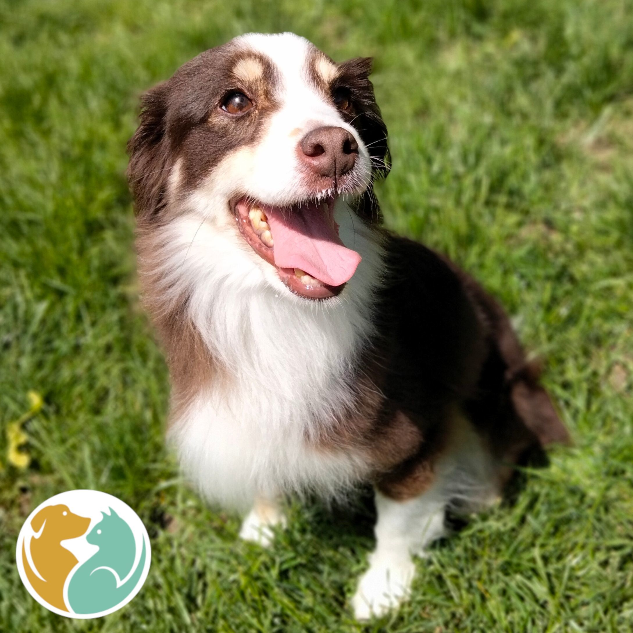 PEANUT - Adopted 06/07!