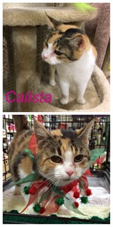 Calista adopted 021718