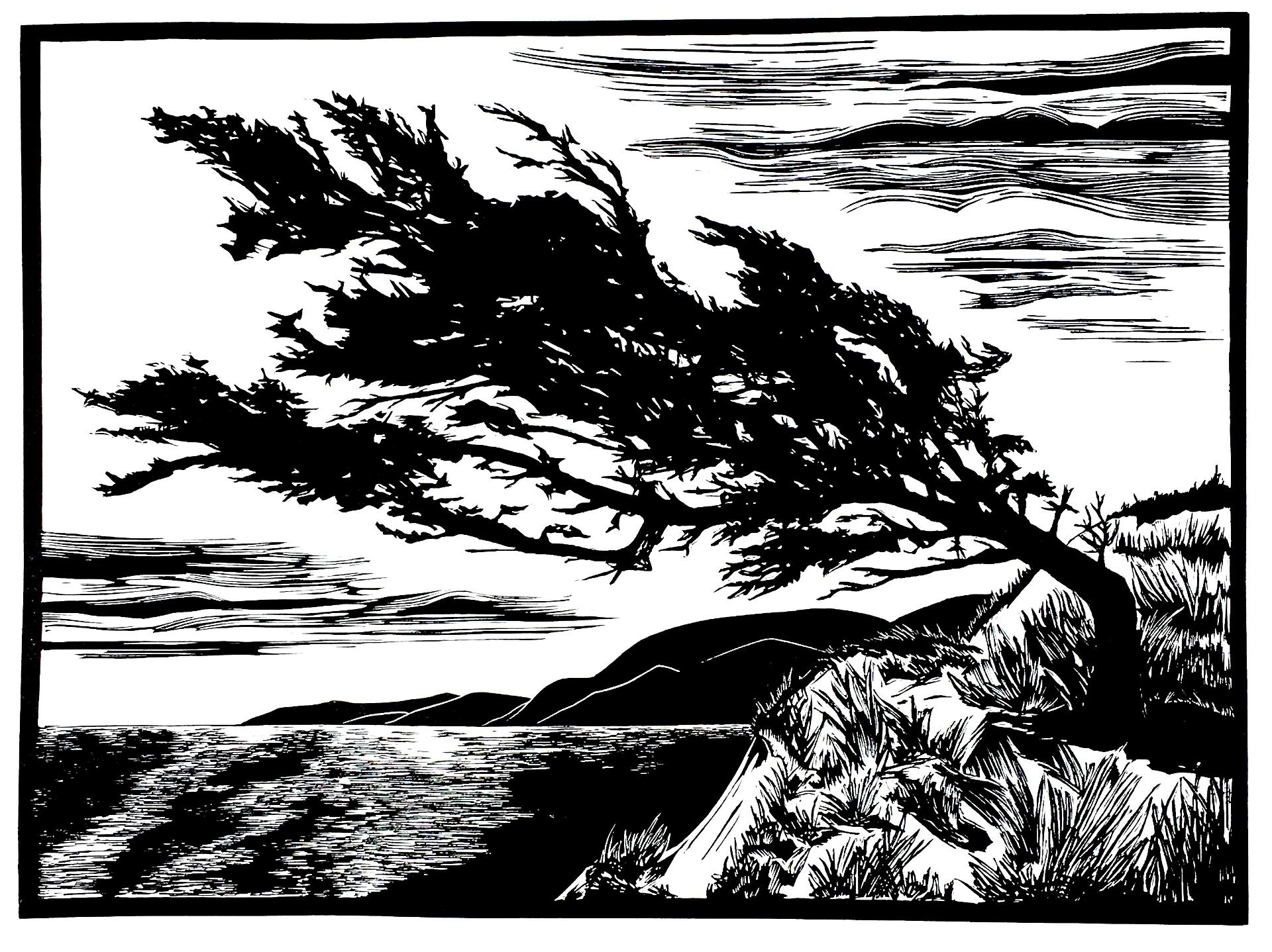 Windswept Bluff