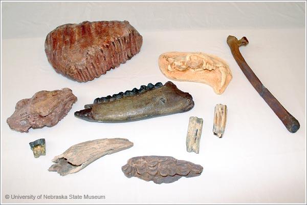 Fossil Mammals