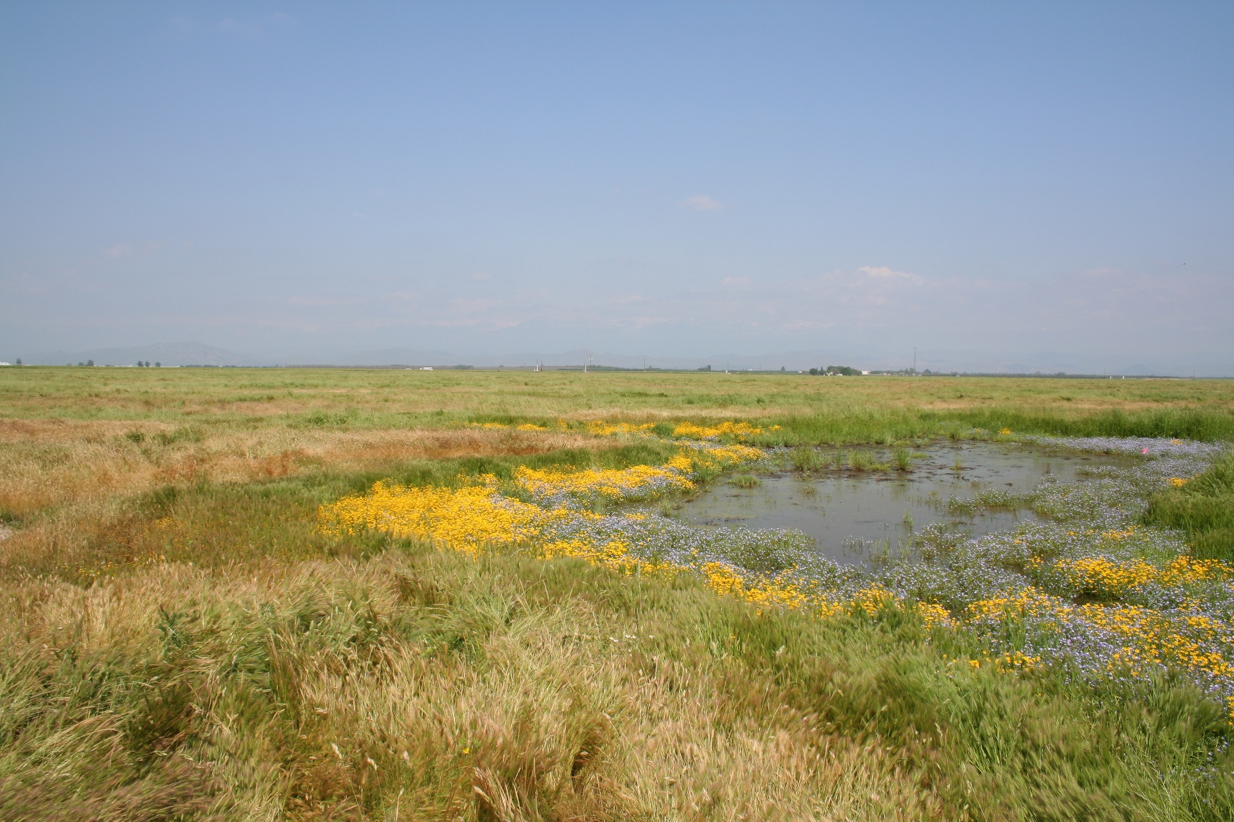 Herbert Preserve Vernal Pools Tour