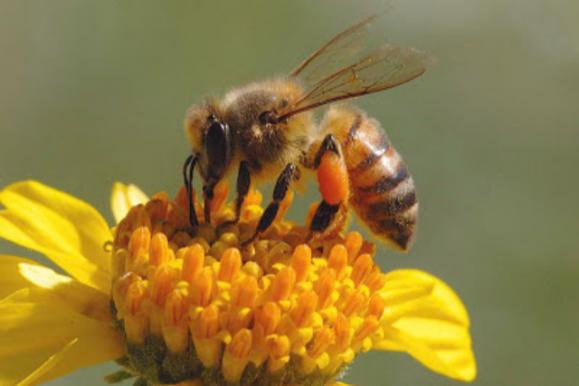 Garden Talk: A Bee's Life in Florida