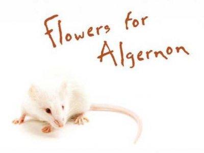 IHS - FLOWERS FOR ALGERNON