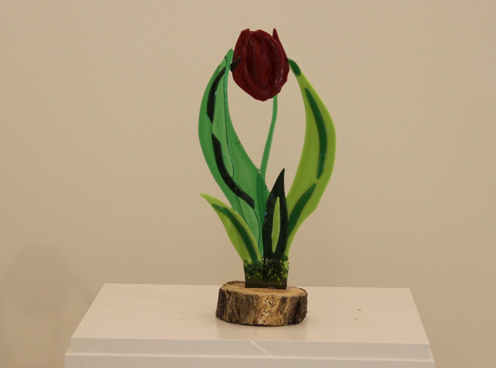 Tulip on Stum