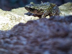 Herpetology Survey Report