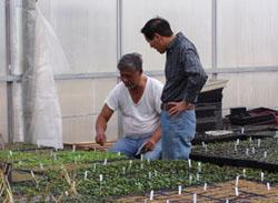 Greenhouse conversation