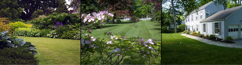 Lawn Landscape Backyard
