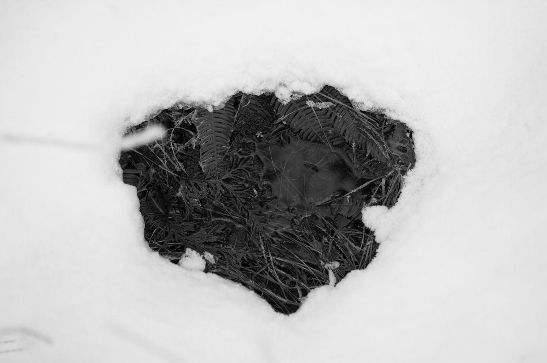 Whitman 18, Muskeg Window in Snow