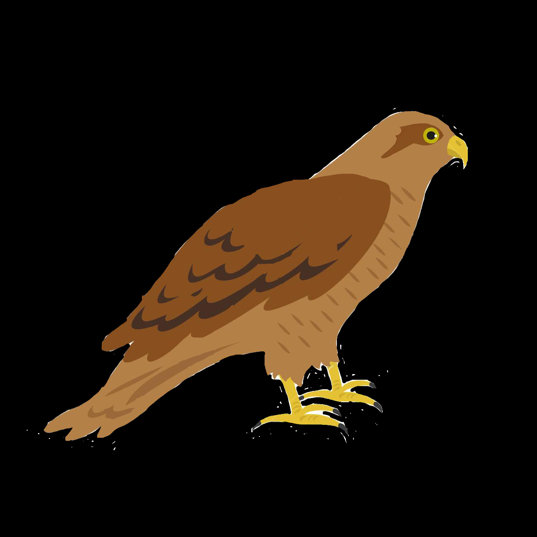 Hawk Sponsor