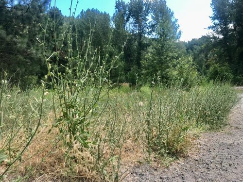 Noxious Weed Pull