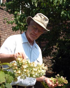 Hydrangea Propagation Workshop