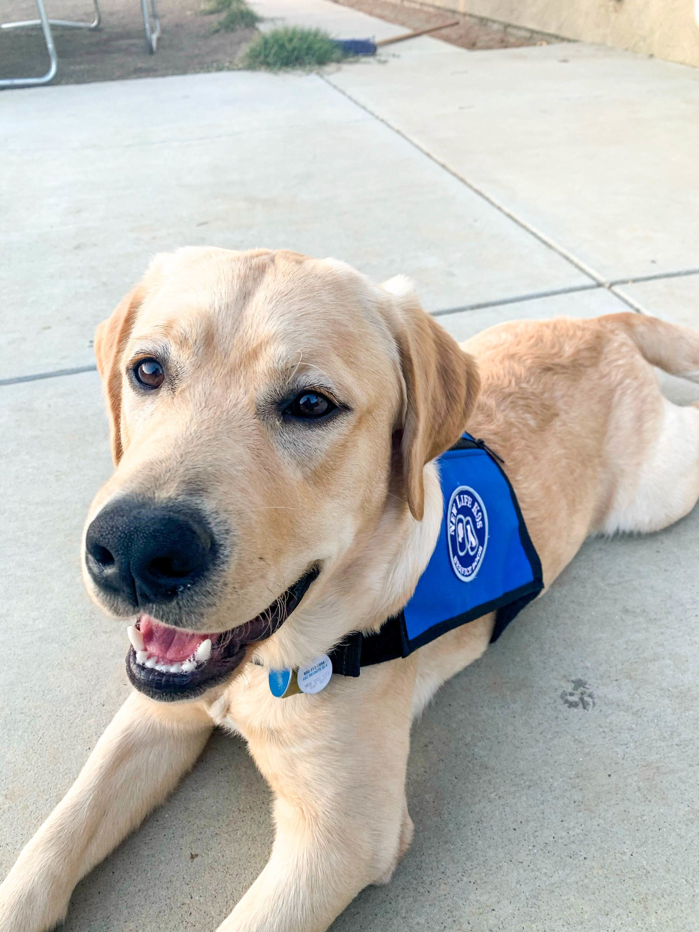 The Difference Between Service Dogs, Therapy Animals, and Emotional Support Animals